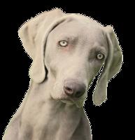 Coco Délice Silver Sfinx